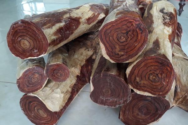cách nhận biết gỗ sưa